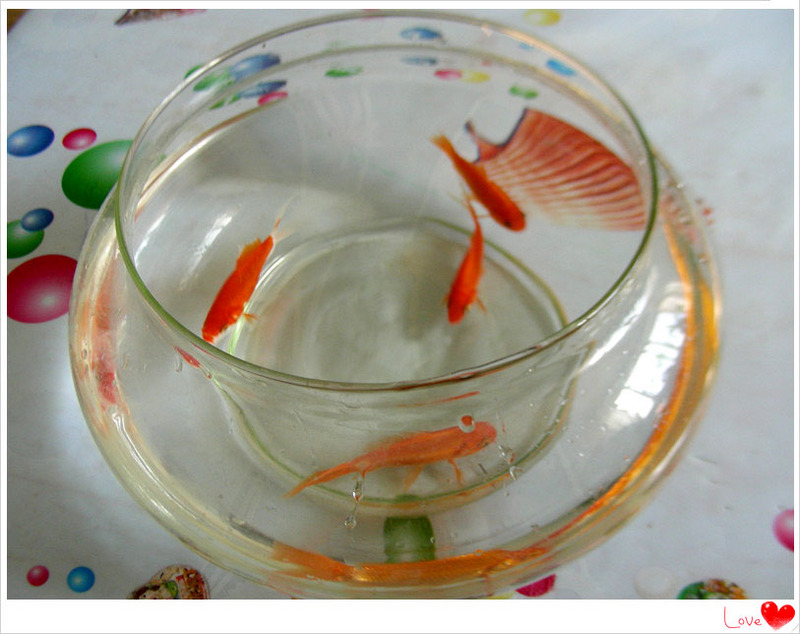 将活泼可爱的四条小金鱼倒了进去.