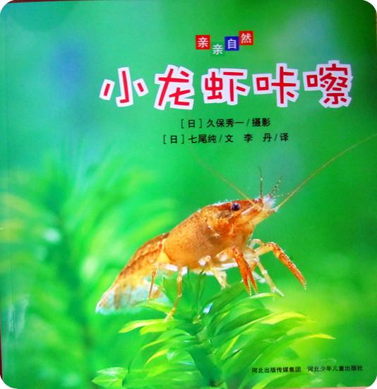 关于小龙虾的生长过程《小龙虾咔嚓》