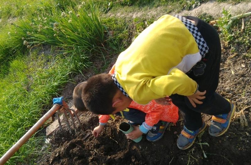 泥土里的动物蚯蚓蚂蚁带画
