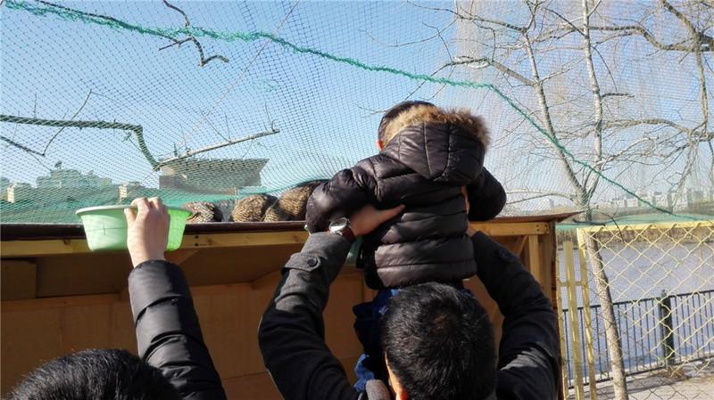 欢乐岛动物园喂小动物