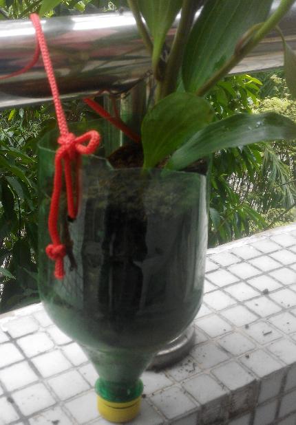 自制花盆,种花喽