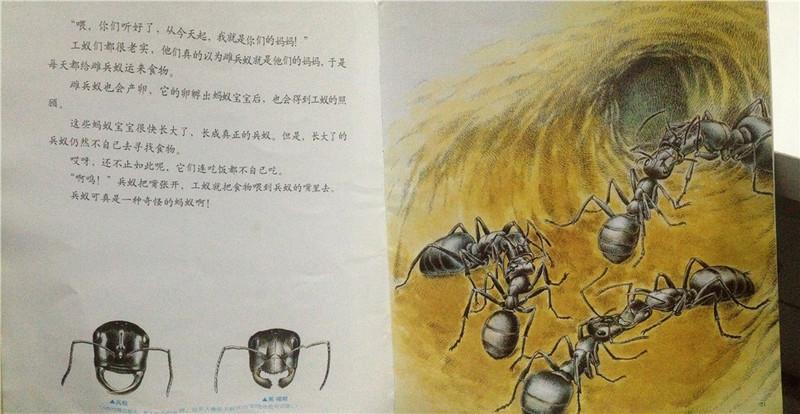 法布尔昆虫记-地下王国统治者蚂蚁