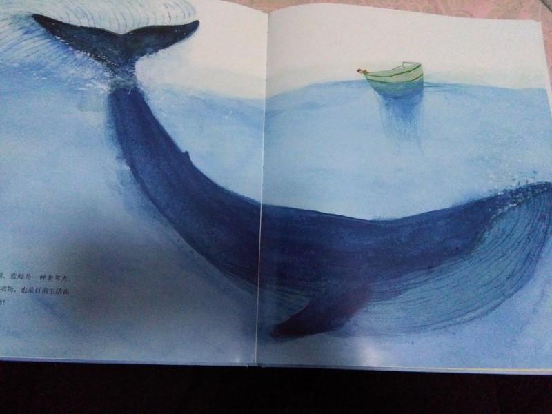 蓝鲸 海一样的美丽图片