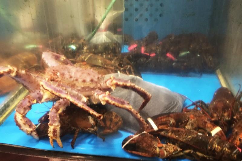 壁纸 动物 海底 海底世界 海洋馆 水族馆 鱼 鱼类 800_534