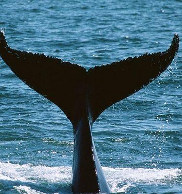 世界上最孤独的鲸 - 宝宝地带