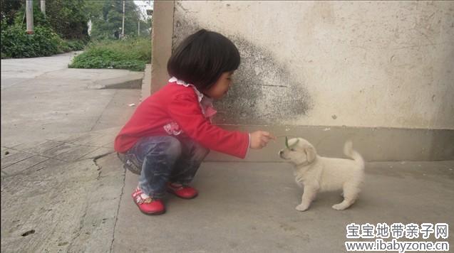 小狗真可爱