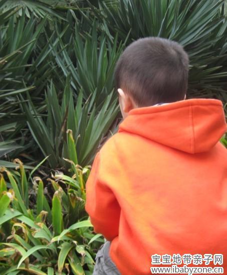 观察大自然中的奇妙事 - 宝宝地带