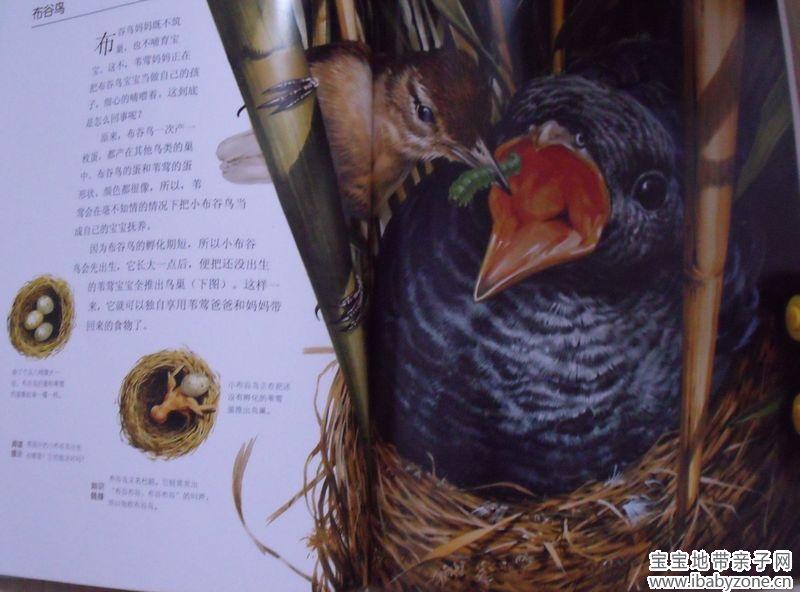 《动物宝宝成长图画书》见证生命的奥秘