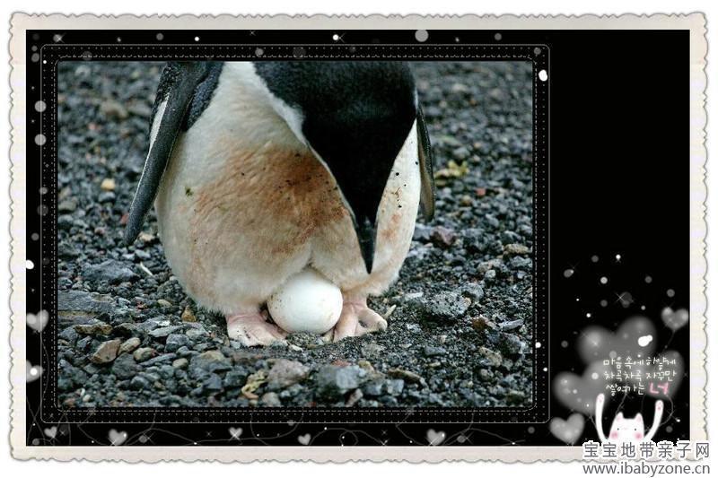 会生蛋的动物和蛋蛋