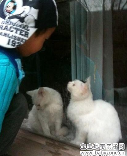 【宝宝眼中的小动物】+隶涵妈妈+喜欢各种小动物