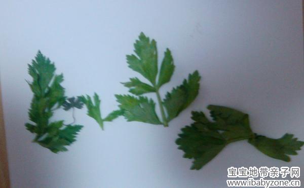 又是趴地板上,拿着一些芹菜叶子,说要做一个菜园,这灵感来源于植物战僵尸吧嗯。果然是,最后做完了,宝宝用蜡笔在图上画了个太阳,又画些黄色的东西,还点了些点点,啥意思呢?原来是浓雾遮住了太阳,菜园的天空下起了雨。 这样的小画只做了两幅,实在因为缺叶子。明年开春等树叶绿起来时一定多做些树叶画