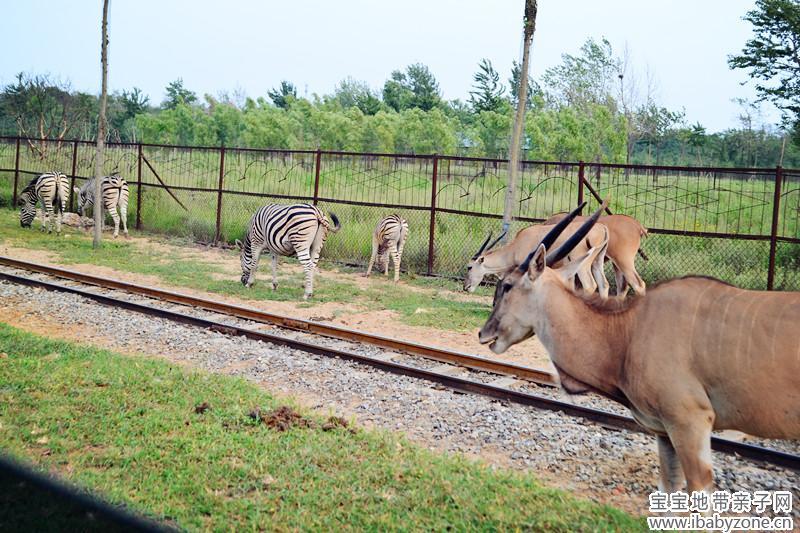 秦皇岛野生动物园 - 宝宝地带