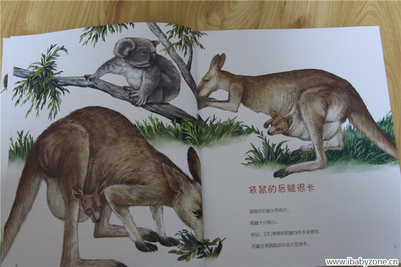 为什么有那么粗的尾巴呀?为什么树上的那个小动物背着她的孩子呀?