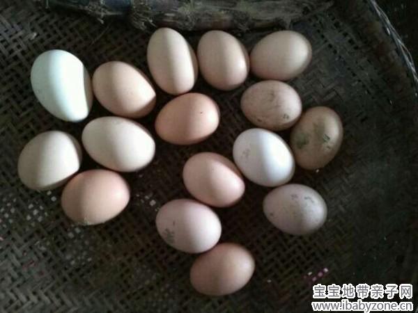 鸡蛋一天吃几个最好_土鸡蛋 - 宝宝地带