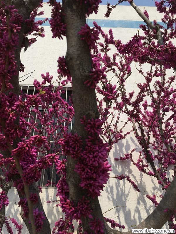 春天,美在身边 上山下海篇图片