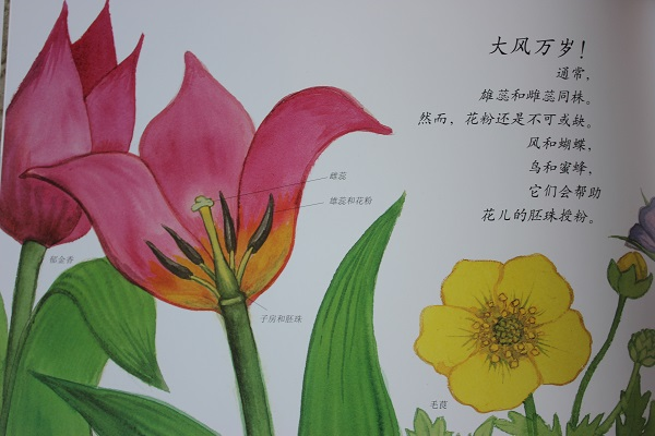 了解植物的生长过程 万物的秘密.生命 美丽的植物