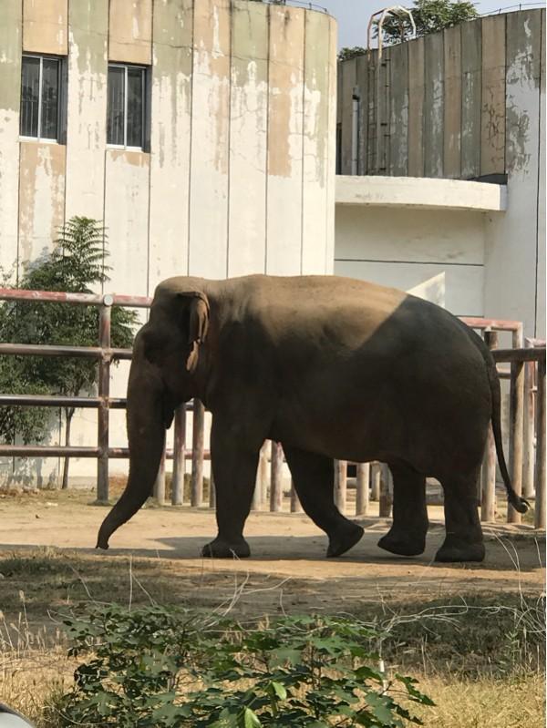 最后我们回去的时候路过猩猩馆想再去看看大猩猩,没想到大猩猩们都在