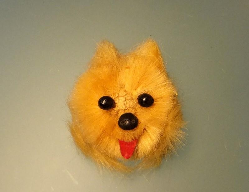 毛球狗狗真可爱