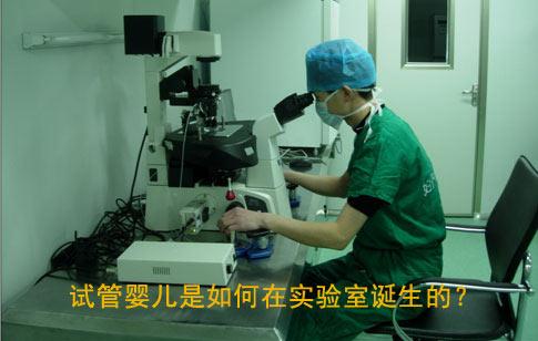 试管婴儿是如何在实验室诞生的?