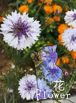 多彩的花卉,开的正艳